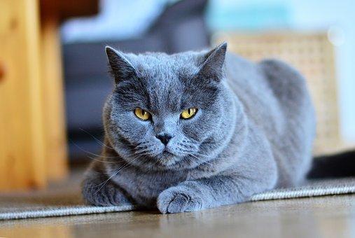 Dresser son chat, comment s'y prendre ?