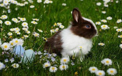 Je veux adopter un lapin, que dois-je savoir ?