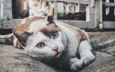 La très utile rencontre du chat avec sa litière