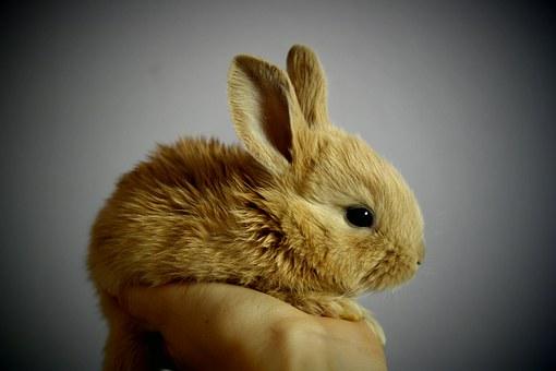 Donner à manger à son lapin