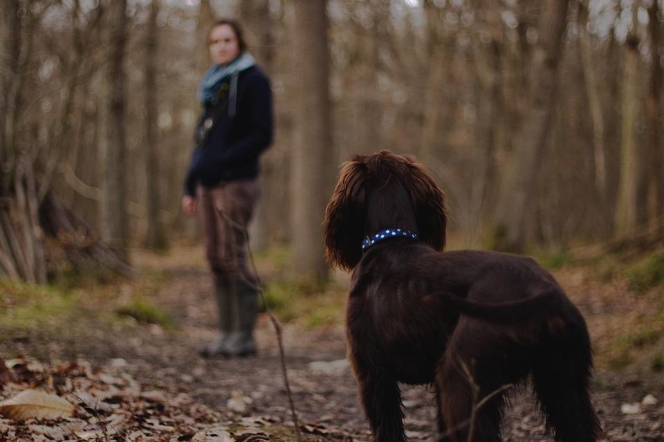 Apprenez à votre chien à se promener sans laisse