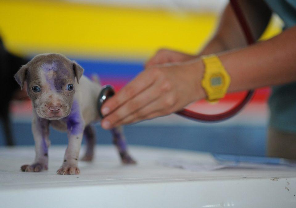 Quand emmener ses animaux chez le vétérinaire ?