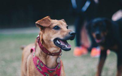 Pourquoi faire garder son chien pendant les vacances ?