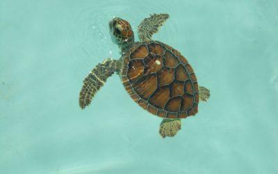 Focus sur les tortues de compagnie