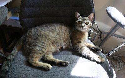 Nos conseils pour éduquer votre chaton en appartement